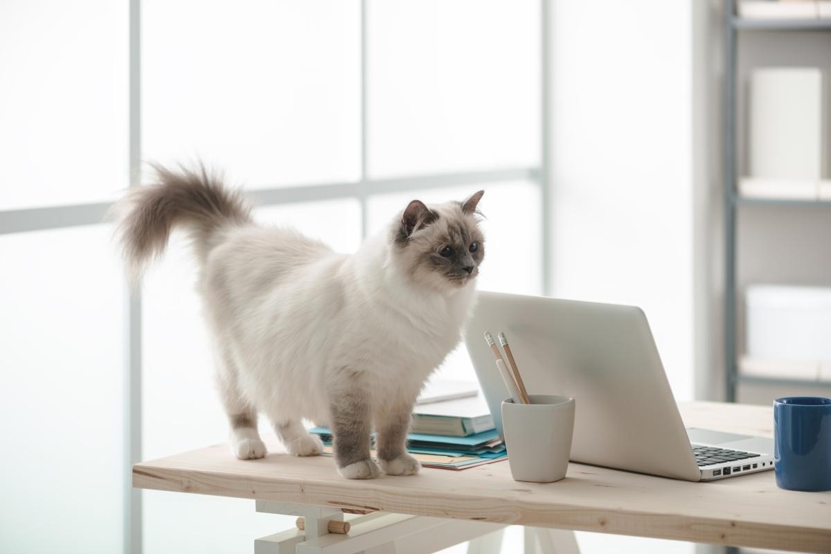 Защо котката ви бута с лапа предметите от масата? Защото за нея тези обекти са плячка. Ако сте забелязали, поведението на домашният ви любимец е същото и спрямо насекомите. Така че - за котката ви това е потенциална жертва, над която да надделее.