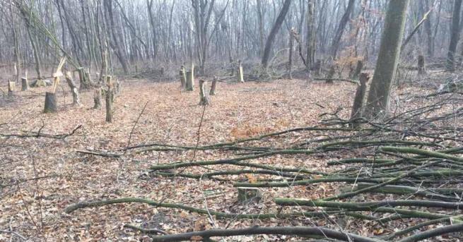 Близо 40 000 лева от незаконен дърводобив са открити в