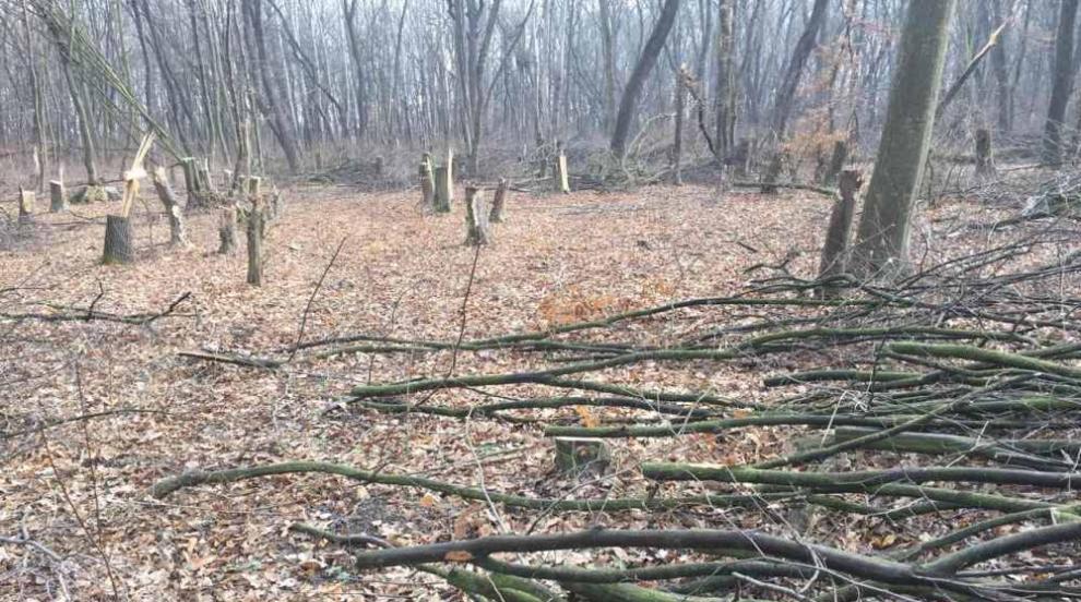 След ареста на горските: Продължават претърсвания и разпити на свидетели
