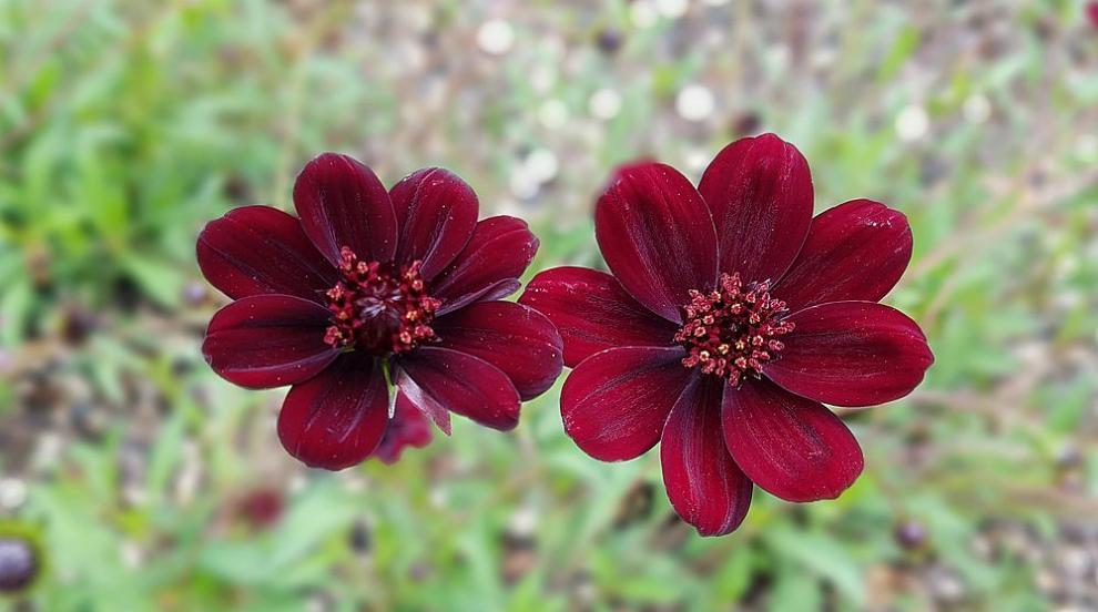 Седем от най-изумителните цветя в света (ВИДЕО)