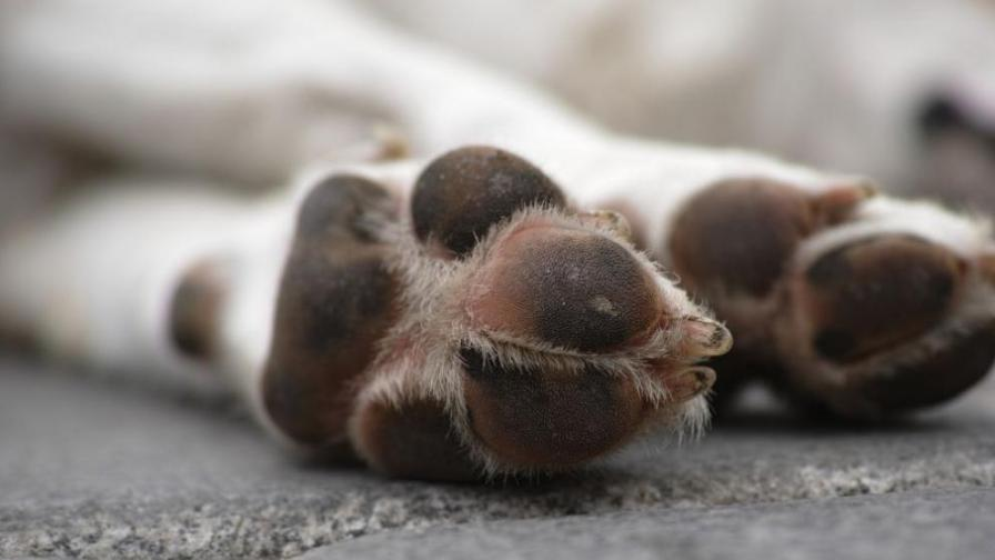 11 кучета и котка отровени в кюстендилско село