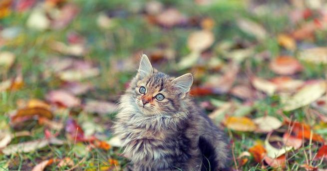 Задава се промяна на времето, като есента ще ни донесе