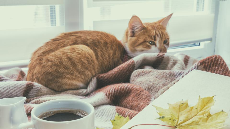 есен котка кафе