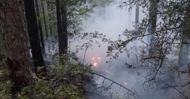 Тревожно е нарастването на броя на горските пожари през последните
