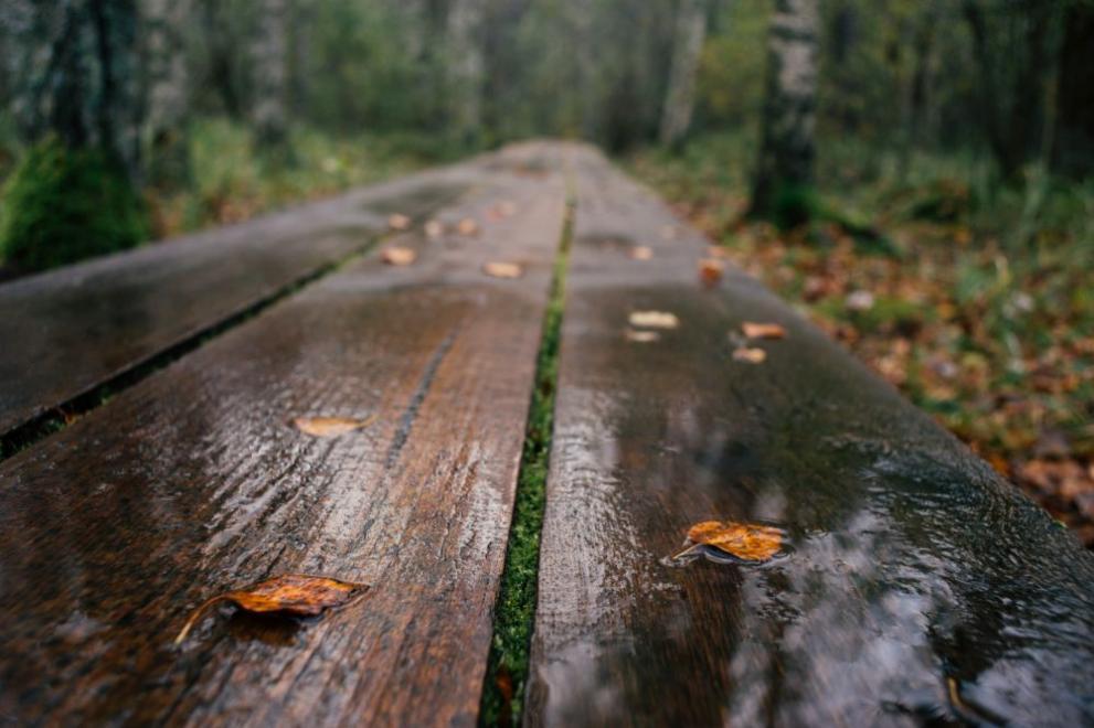 времето есен дъжд плод