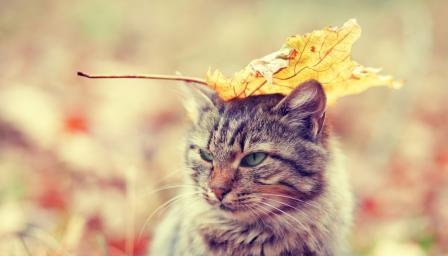 Ще ни изненада ли времето през есента в следващите дни?