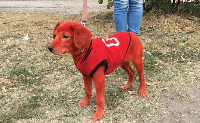 Боядисаха бездомно кученце с боя за коса