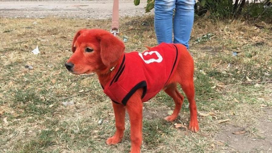 Кученцето Реди