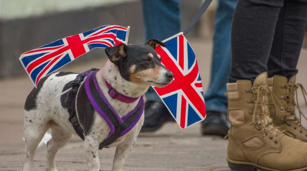 И кучета ще протестират срещу Брекзит