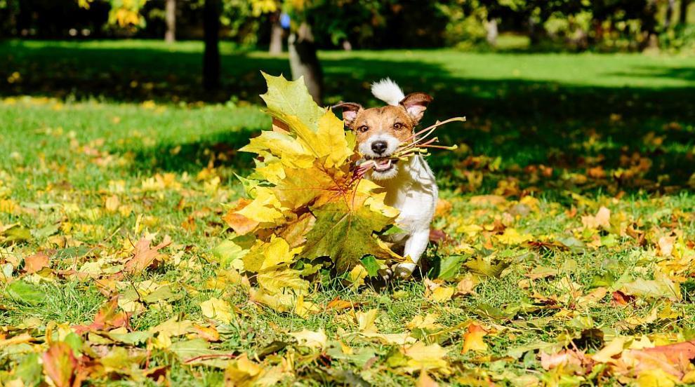 Хубавото есенно време продължава (ВИДЕО)