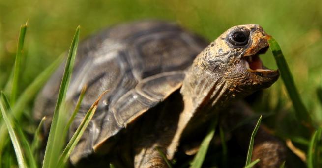 Повече от 60 застрашени костенурки изчезнаха от зоопарк в най-южната