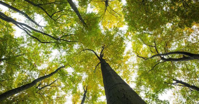 Европейските страни не трябва да се осланят на горите си,