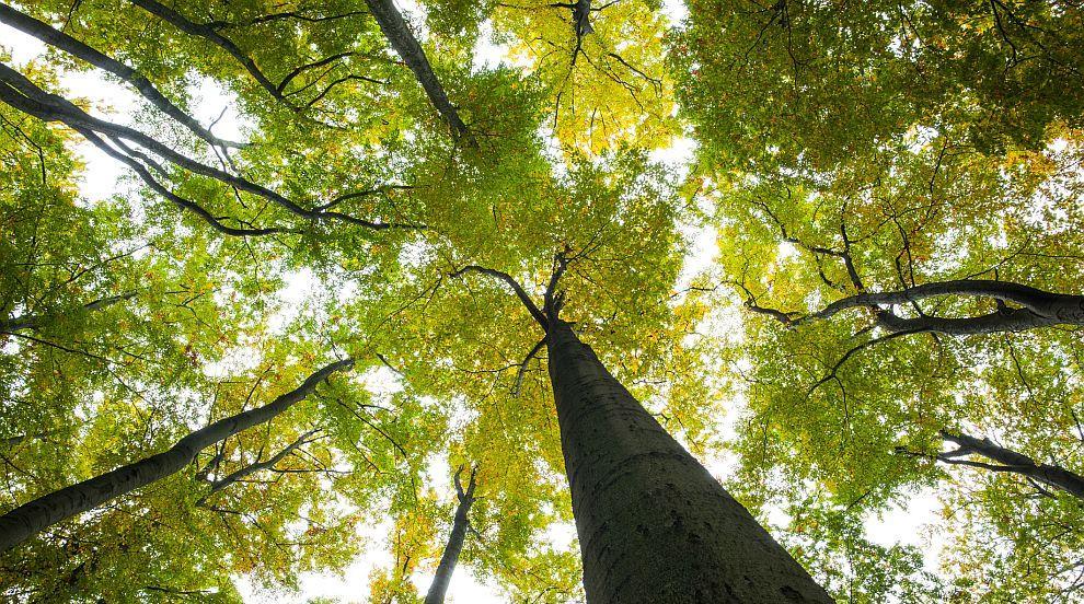 Знаете ли това за горите?