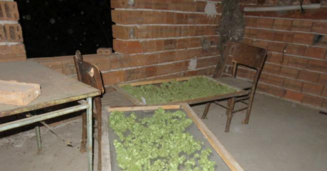 Криминалисти от РУ-Дупница са иззели голямо количество марихуана, незаконно притежавано