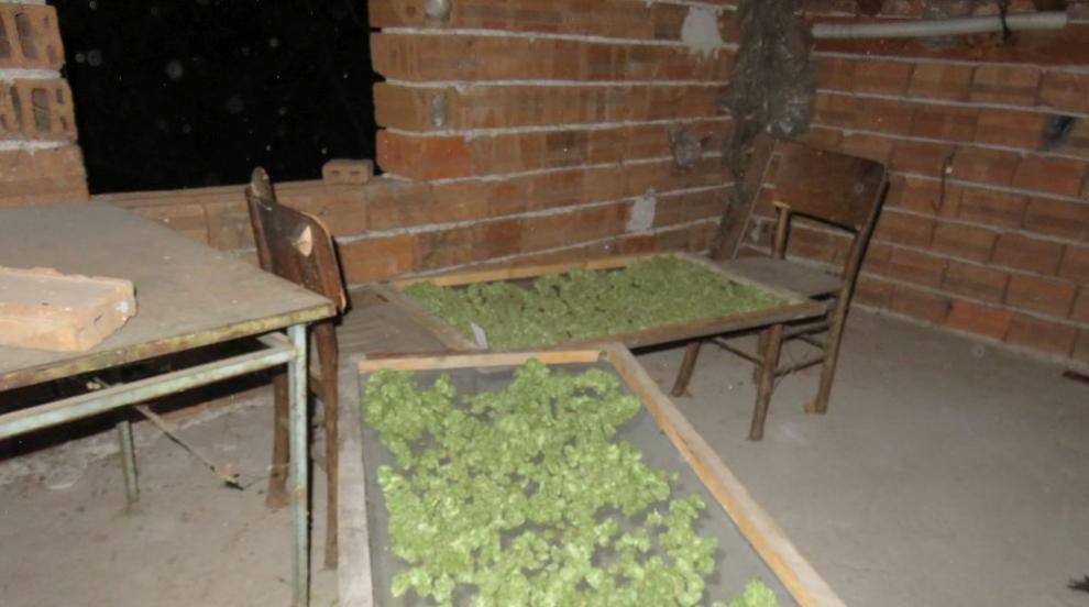 Полицаи иззеха марихуана, оръжие и боеприпаси от имот в Джерман (СНИМКИ)