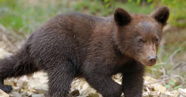 Защитници на дивата природа в щатаМериленд вървяха по петите на
