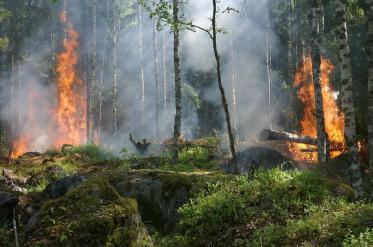 Каква е ситуацията след пожарите на Канарските острови