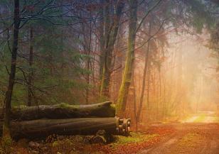 Красивите есенни мъгли