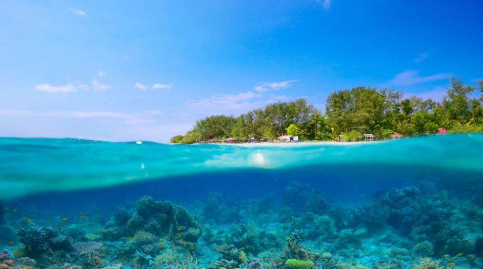 Коралови рифове са застрашени от климатични промени...