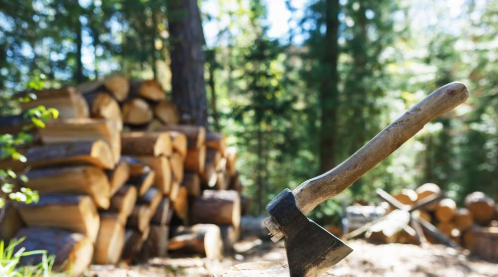 Дърво премаза 30-годишен мъж в Паталеница