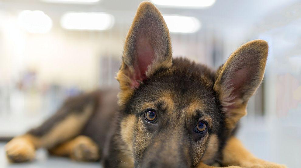 Полицейско куче загина при стрелба в Мичиган (СНИМКИ)