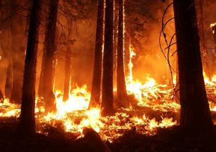 Гори огромен пожар на Халкидики