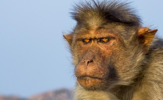 Маймуна уби бебе на 12 дни