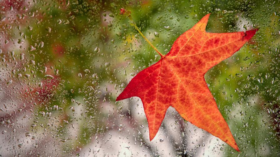 Защо дъждът мирише толкова хубаво<br /> <br /> Преди да стане достатъчно студено за бели, пухкави снежинки, есента може да донесе дъждове със сладък аромат. Защо свежият дъжд мирише толкова добре? Една от причините е петрикор – землистата миризма, която се усеща след падането на дъжд върху суха почва. Друга причина може да бъде озонът, който може да се формира по време на гръмотевични бури и който мирише малко като хлор.