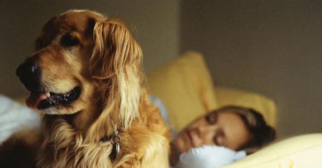 Стопанките на кучета имат по-здрав сън, когато ги допускат да