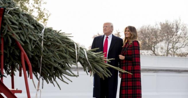 Коледното дърво, което ще краси Белия дом за предстоящите празници