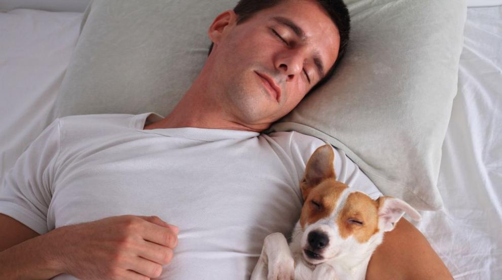 Да оставим ли кучето да спи в леглото ни? (ВИДЕО)