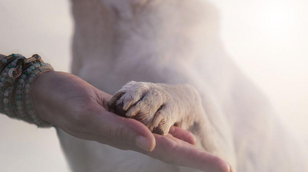 Истинско приятелство: Кученце стана водач на ослепелия си приятел - голдън...