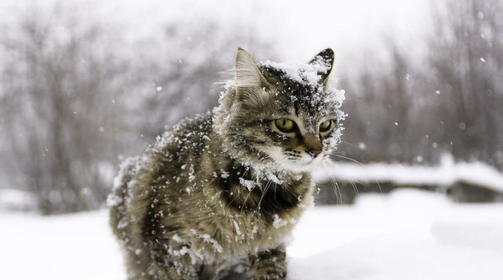 Температурите се понижават, дъждът преминава в сняг