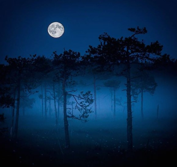 Оси Сааринен заснема девствените гори на Финландия, където мирът и дълголетието застилат върховете на планините, короните на дърветата и тревите, сред които, необезпокоявани, обитават дивите животни