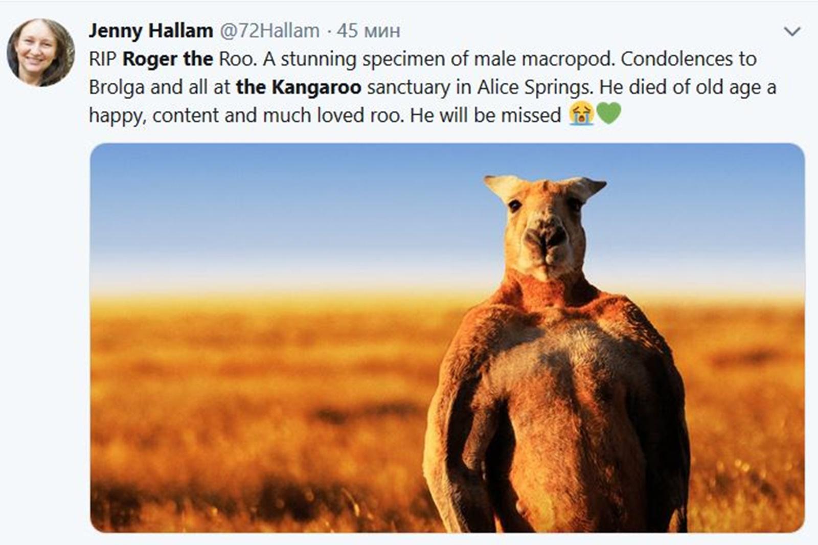 Мускулестото кунгуру Роджър, което стана интернет сензация през 2015 г. и си спечели място сред дестте най-известни животни на света е починало на 12-годишна възраст. За смъртта му беше съобщено вчера от директора на резервата - Крис Барнес, в емоционално видео, споделено във Фейсбук страницата на резервата. Само за 22 часа видетото е гледано от над 80 000 души, а социалните мрежи вече са пълни със скръбни постове.