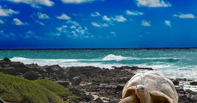 Двадесет и пет зелени костенурки бяха пуснати обратно сред дивата