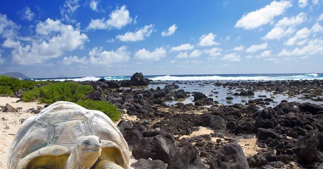 Галапагоските костенурки притежават генни вариации, свързани с възстановяване наДНК, съобщи