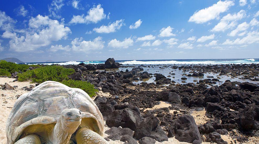 Разкриха тайната на дълголетието на галапагоските костенурки