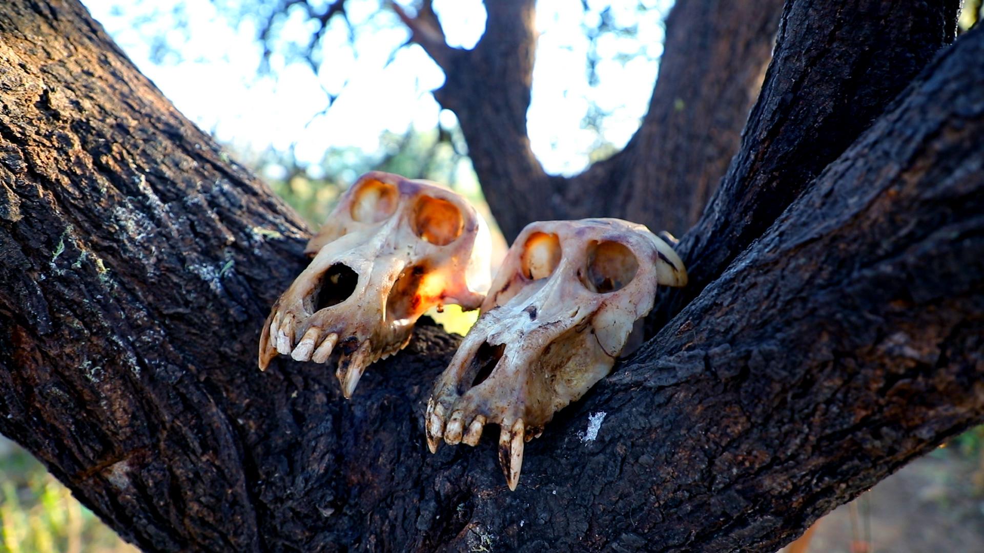 Хадзабе, последните деца на природата