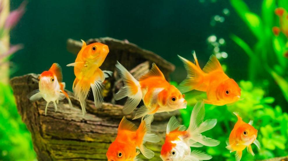 Звуците на рибите разкриват екологичното равновесие във водата
