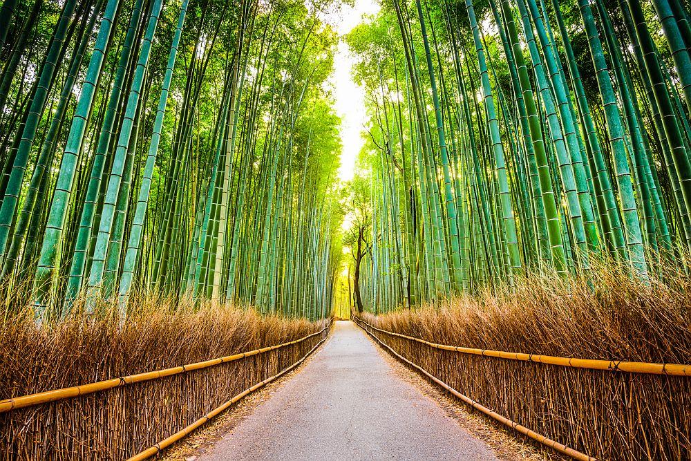 Бамбуковата гора Сагано се намира в Арашияма - квартал в западните покрайнини на Киото. Една от най-красивите гори в света обхваща площ от 16 квадратни километра. Всеки посетил това приказно място остава безмълвен, не само заради прелестта му, но и заради звуците, който вятъра издава преминавайки през гъстия бамбуков лес.