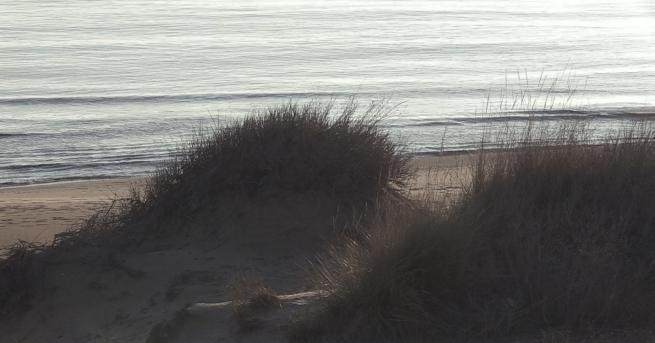 """Снимка: Дюните на """"Смокиня"""" са безвъзвратно изгубени?"""