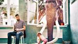 Глиганите на Берлин и още градове с неочаквани животински обитатели