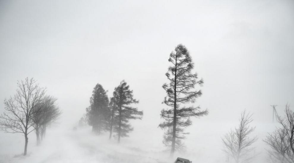 Студовете в Полша тази зима взеха над 60 жертви