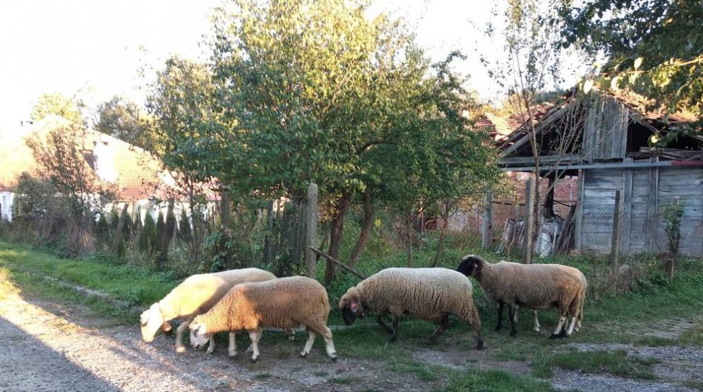 Продължава спорът между фермерите от Болярово и БАБХ
