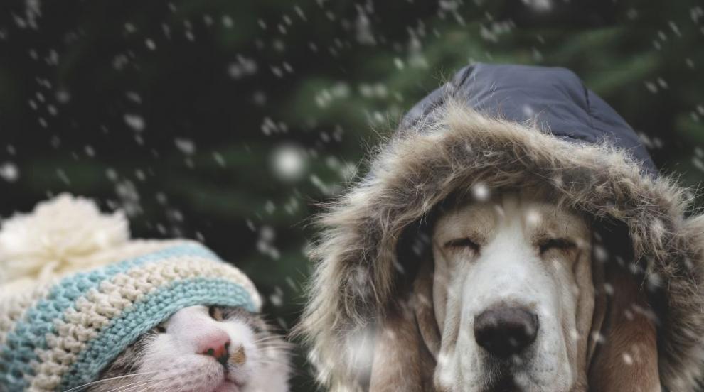 Зимата се завръща: Студ и сняг ни чакат следващата седмица