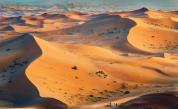 Откриха милиони дървета в Сахара