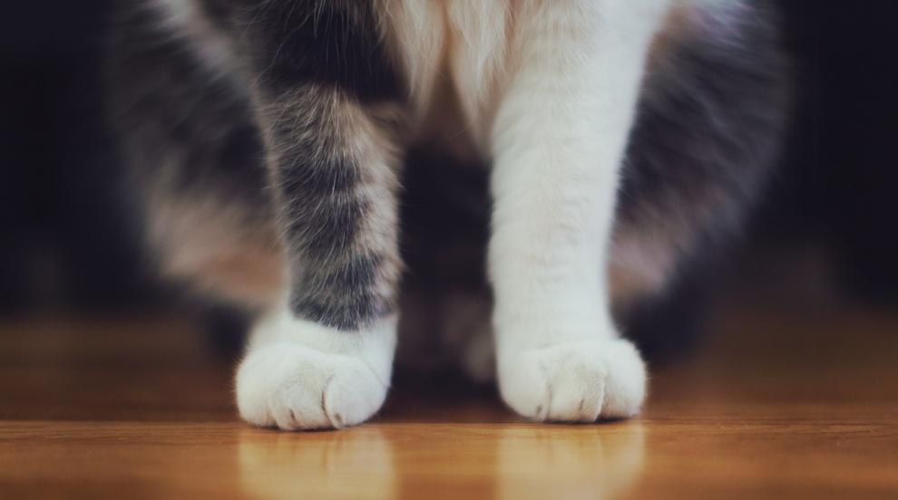 Ветеринари съживиха замръзнала котка