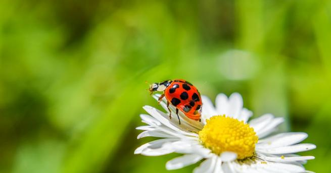 Насекомите намаляват по цял свят, като 40 процента от видовете