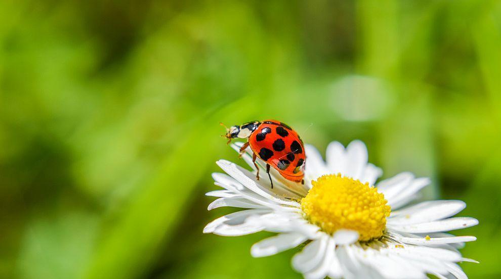 Насекомите намаляват застрашително, само мухите и хлебарките стават все повече